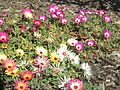 BCBG Flowers 08.JPG