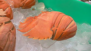 Ibacus peronii - A cooked Balmain bug