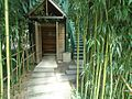 Bamboo surrounding treetop viewing structure.JPG