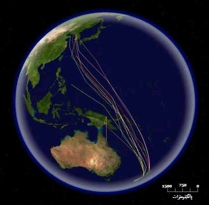 Bar-tailed Godwit migration-ar