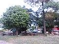 Barrio el socorro - panoramio (2).jpg