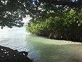 Beach view Mangel Halto 11 36 51 486000.jpeg