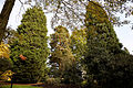 Beale Arboretum pines and Ilex Collection - West Lodge Park - Hadley Wood - Enfield London.jpg