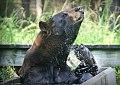 Bear splash.jpg
