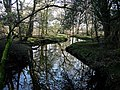Beaulieu River - geograph.org.uk - 1286523.jpg