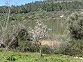 Beit Zayit, Israel - panoramio (12).jpg