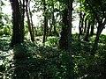 Berdychowo, old evang. cemetery (7).jpg