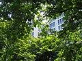 Berlin Tiergartenrand Lennéstr.jpg