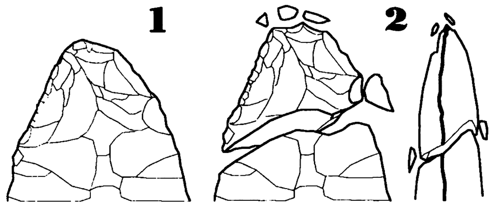 Bifaz-Rotura de la punta