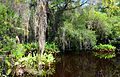 Big Cypress Bend Boardwalk 3.jpg