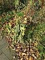Big plant - panoramio (2).jpg
