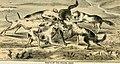 Bird-nesting in north-west Canada (1892) (14770180453).jpg