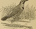 Birds of a Maryland farm - a local study of economic ornithology (1902) (14753147504).jpg