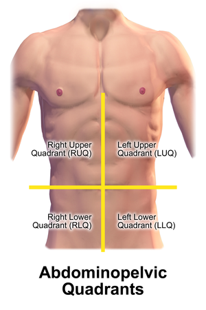 Quadrant (abdomen) - Quadrants of the abdomen