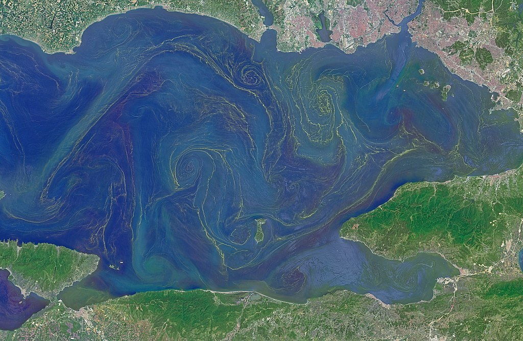 phytoplankton in the Sea of Marmara