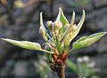 Blossom0119.jpg