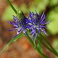 Blue - Flickr - Stiller Beobachter.jpg