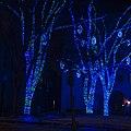 Blue Trees (11963984165).jpg