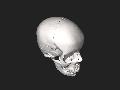 BodyParts3D Skull.stl