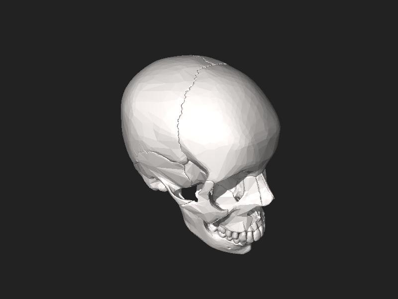 File:BodyParts3D Skull.stl