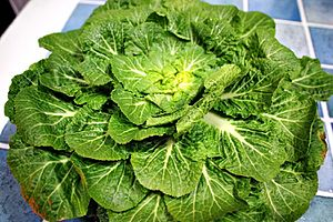 Brassica rapa - Image: Bomdong cabbage