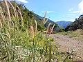 Bongabon, Nueva Ecija, Philippines - panoramio (10).jpg