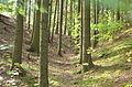 Boršegrýn 06.JPG