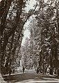 Bosque de la Alhambra, Granada, Spain (4874965217).jpg