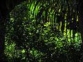 Bosque tropical en contraluz, Isla de Margarita, Venezuela.jpg