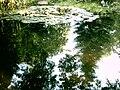 Botanical garden in Poznań21.JPG