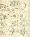 Botanische Zeitung (1843-1910) (19783505183).jpg