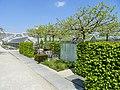 Botanischer Garten München-Nymphenburg - DSC07908.jpg