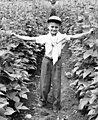 Boy standing in a pole bean field, circa 1940 (7951541150).jpg