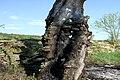 Brandeisatz Baum Flur Böschung (41567112021).jpg