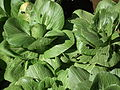 Brassica rapa subsp. chinensis - Pak choi from lalbagh 2291.JPG