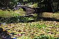 Bridge in the Queenstown Gardens 4.jpg