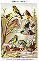 Brockhaus and Efron Encyclopedic Dictionary b50 718-1.jpg