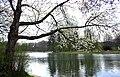 Bruxelles - Étang - Bois de la Cambre 1.JPG