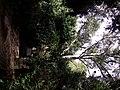 Buskett forest - panoramio (2).jpg