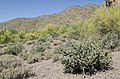 Butcher Jones Trail, Burro Cove and Beyond, Tonto National Park, Arizona - panoramio (54).jpg