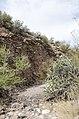Butcher Jones Trail to Pinter's Point Loop, Tonto National Park, Saguaro Lake, Ft. McDowell, AZ - panoramio (152).jpg