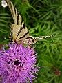 ButterflyIn Herastrau.jpg