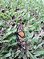 Butterfly 20180912 122258.jpg