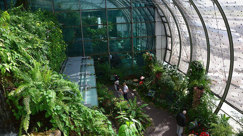 File:Butterfly Garden Changi Airport Singapore by Dr Raju Kasambe DSC 5250 (2).jpg