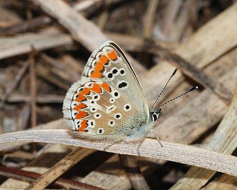 Butterfly November 2007-9.jpg