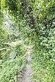 Bwindi Impenetrable National Park 11.jpg