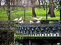Cónclave avícola (8378435016).jpg