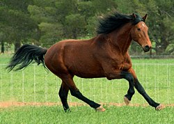 meaning of canter