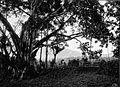 COLLECTIE TROPENMUSEUM Uitkijkpunt met waringin Fort de Kock TMnr 60004095.jpg