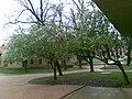 CU boulder tree.jpg
